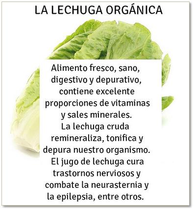 lechuga orgánica